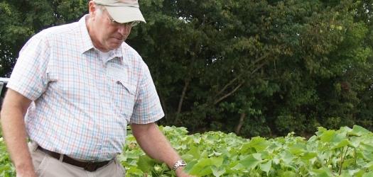 NC Commissioner Steve Troxler: Boll Weevil Assessment Stays at .75/acre