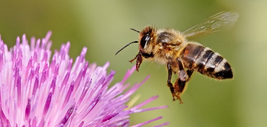 Environmentalist Claim EPA's Lax Recordkeeping for Colony Collapse Disorder