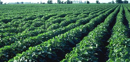 SC Field Agronomist Outlines 2014 Trials