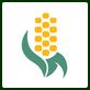 corn_icon
