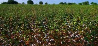 EPA Taking Comments on Dicamba Use and Label