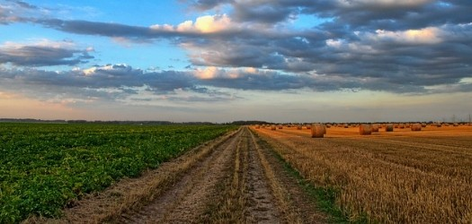 The recent World Trade Organization agreement between the U.S. and Brazil regarding U.S. cotton exports provides certainty for cotton farmers. The World...