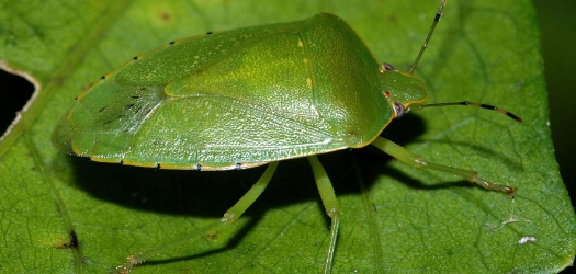 Cold Blast Could Cause Shift in Insect Species