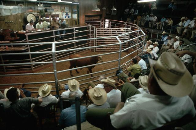 Traffic Light Through NC Livestock Auctions