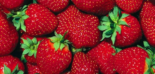 Southeastern Strawberry Crop Should Weather Cold Temp's Well