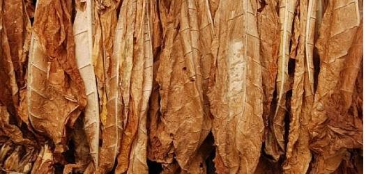 Tobacco GAP Meetings Get Underway Next Week
