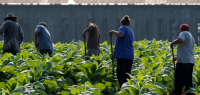 Presidential Candidate Front-runner's Approach to Immigration – No Deal for Agriculture