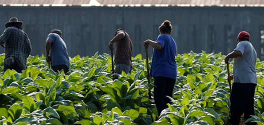 Farm leaders see Donald Trump's call to deport the nation's illegal immigrants, as a non-starter for agriculture, heavily dependent on migrant labor...