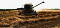 Winter Wheat Turns the Corner