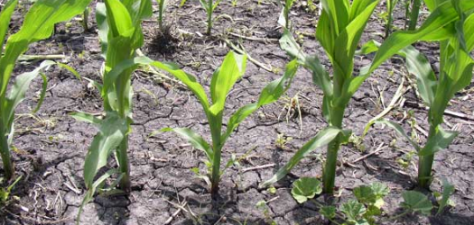 As is often times the case this time of year, row crop producers are faced with decisions; what to plant on what...