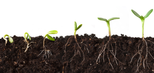 For the second year, the North Carolina Department of Agriculture's Agronomic Division will have a fee for soil testing during the winter...