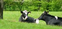 12 Aprils Dairy South Carolina's Farmer of the Year