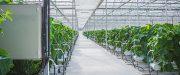 indoor farm