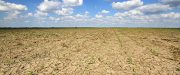 dry soil