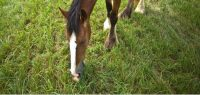 Pasture Workshop Teaches Ways to Maximize Grass for Horses