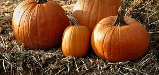 NC Among Top Ten Pumpkin-Producing States