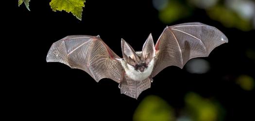 Bring on Bat Week 2020