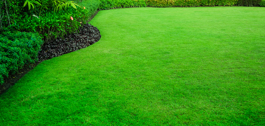 Don't Wait Until Next Spring to Add New Life to Your Lawn